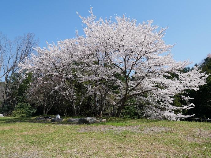 http://www.kanedakensetsu.co.jp/blog/IMG_0528-30.jpg